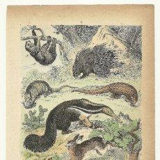 Arte: ZOOLOGÍA MAMÍFEROS ROEDORES CROMOLITOGRAFÍA E. HOCHDANZ 1880. Lote 120232327