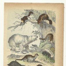 Arte: ZOOLOGÍA MAMÍFEROS ÚRSIDOS (OSOS) CROMOLITOGRAFÍA E. HOCHDANZ 1880. Lote 120232551