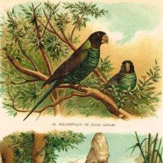 Arte: CROMOLITOGRAFIA ORIGINAL SIGLO XIX- LOROS Y CACATUAS - ORNITOLOGIA - FAUNA - AVES TROPICALES - . Lote 127120835