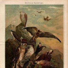 Arte: 1888 AVES RAPACEZ ALEMANAS CETRERÍA ORNITOLOGÍA - CROMOLITOGRAFÍA ORIGINAL SIGLO XIX. Lote 139233090
