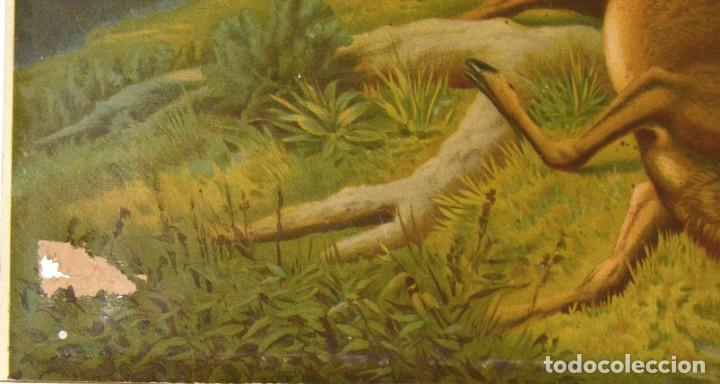 Arte: LA CAZA DEL CIERVO - CROMOLITOGRAFÍA SIGLO XIX - Foto 10 - 189305347