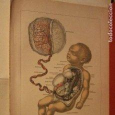 Arte: TORRENTE SANGUINEO EN EL FETO ANTIGUA Y ORIGINAL LITOGRAFIA ALEMANA DEL 1887 MEDICINA. Lote 197138131