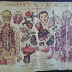Arte: LÁMINAS ANATÓMICAS. LIBRAIRIE FERNAND NATHAN. PARÍS.. Lote 216960150