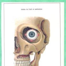 Arte: MEDICINA ANATOMÍA MANDÍBULA Y ÓRBITA DE LOS OJOS CROMOLITOGRAFÍA 1900. Lote 256020710