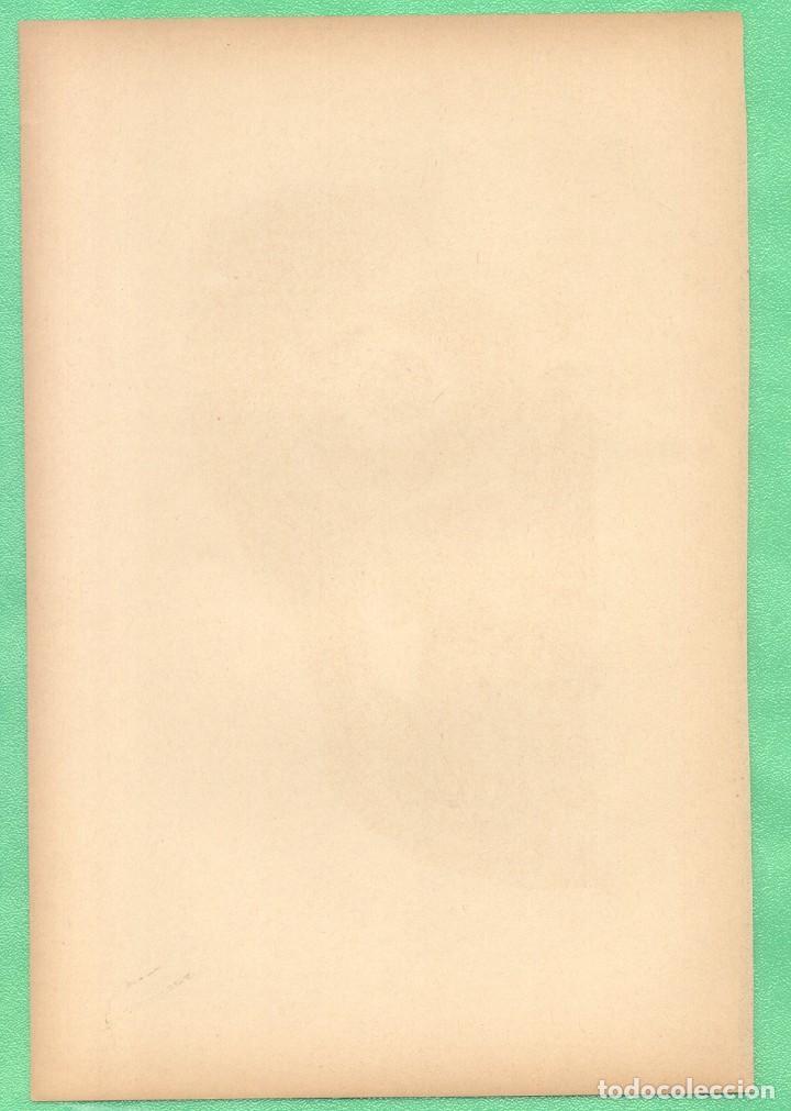 Arte: MEDICINA ANATOMÍA MANDÍBULA Y ÓRBITA DE LOS OJOS CROMOLITOGRAFÍA 1900 - Foto 2 - 256020710