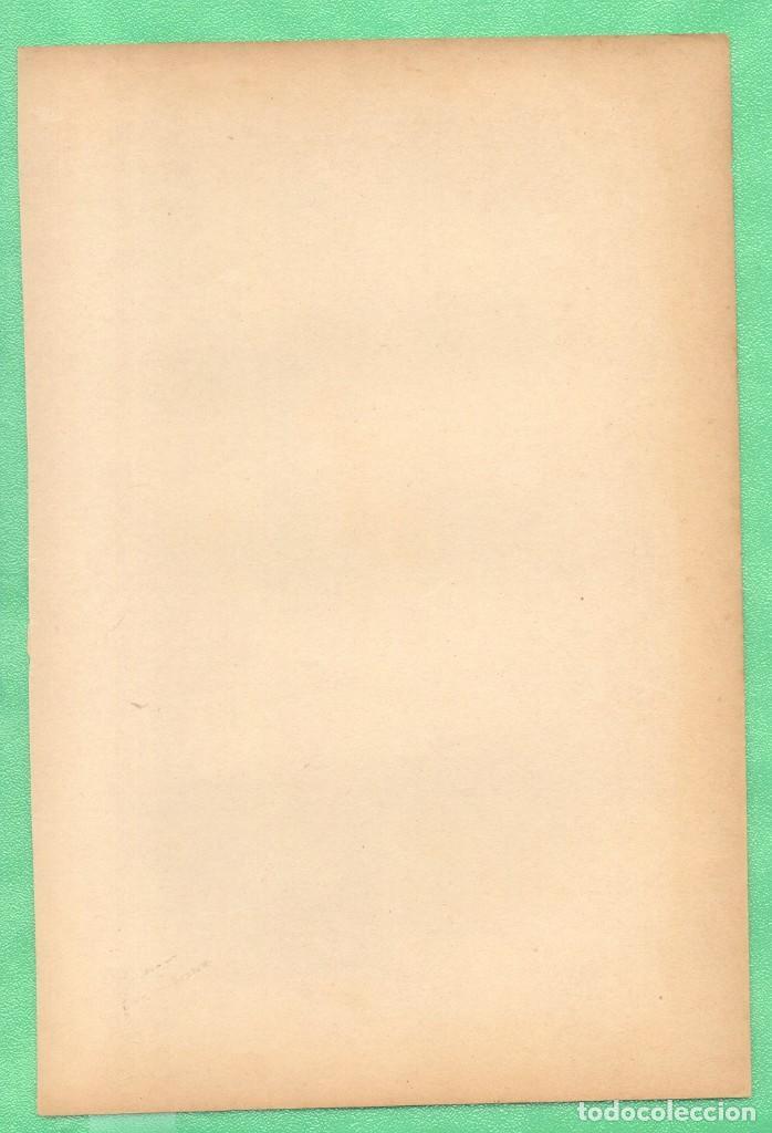 Arte: MEDICINA ANATOMÍA ÓRGANOS DE LA RESPIRACIÓN CROMOLITOGRAFÍA 1900 - Foto 2 - 256027145