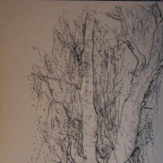 Arte: DIBUJO ORIGINAL A LAPIZ FIRMADO Y DEDICADO A ARTISTA DE MALAGA. Lote 13078453