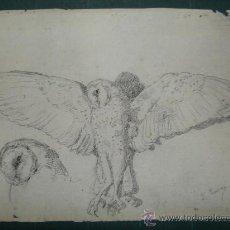Arte: F. JIMENEZ. ESTUDIO DE UNA LECHUZA. Lote 26923092