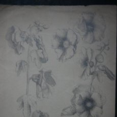 Arte: EXCELENTE DIBUJO A LAPIZ, SIGLO XIX POSIBLEMENTE ESCUELA MALAGUEÑA - ENMARCADO. Lote 27671522