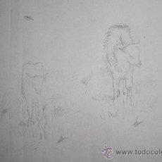 Arte: CARBONCILLO SOBRE PAPEL DE PEDRO YNGLADA - PAREJA CORDEROS - FIRMADO - MED. DIBUJO: 15*10 CM. Lote 155646190