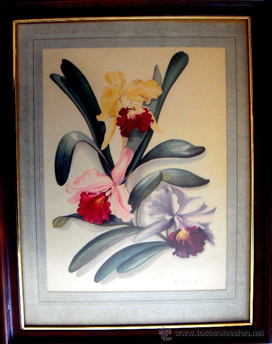 lmina dibujo de flores a color de los aos 40  Comprar Dibujos