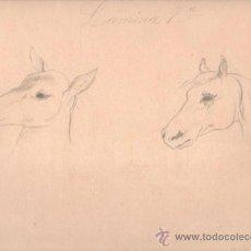 Arte: DIBUJO CARBONCILLO DE JULIA DE COTRO, ROSTROS PERFILES CABALLOS, 30 POR 25CM. Lote 31064935