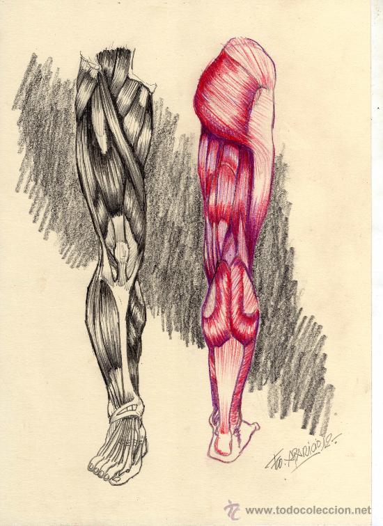 estudio de anatomia a lapiz/color. original fir - Comprar Dibujos ...