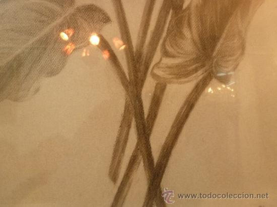 Arte: dibujo flores - Foto 6 - 37007591
