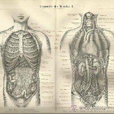 Arte: UXG APARATO DIGESTIVO FRONTAL ANTIGUO Y ORIGINAL GRABADO ALEMANIA 1887 ANATONOMIA INTERNA HUMANA. Lote 39043107