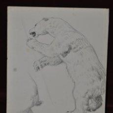 Arte: ALEXANDRE CARDUNETS CAZORLA (BARCELONA, 1871-1944) DIBUJO A CARBON. OSO. Lote 42754405