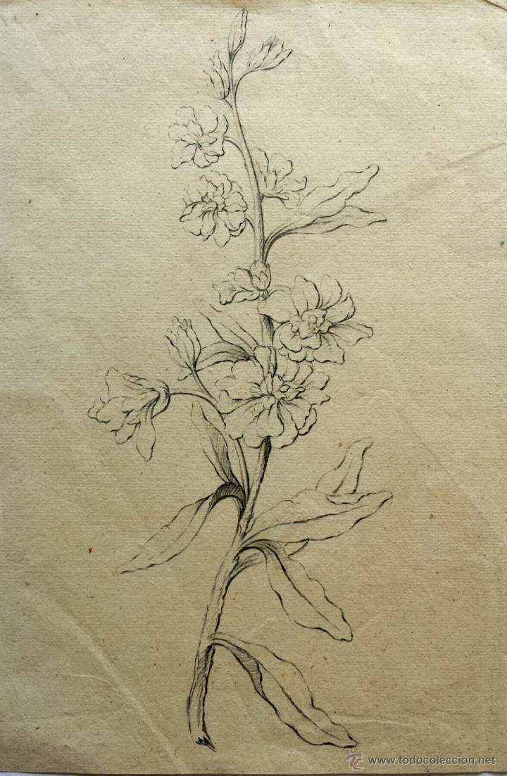 Maravillosas Flores Originales Sobre Papel Verjurado Interesante Marca De Agua