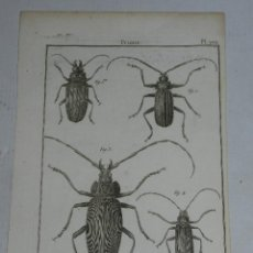 Arte: GRABADO DE ESCARABAJOS S.XVIII - HISTOIRE NATURELLE, INSECTES ( INSECTOS ), AUTOR BENARD DIREXIT. Lote 44287543