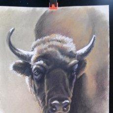 Arte: BISONTE EUROPEO. PRECIOSO DIBUJO AL PASTEL ORIGINAL FIRMADO: FRANCIS'14. 30 X 42 CM.. Lote 46119986