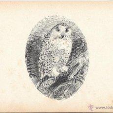 Arte: DIBUJO A PLUMILLA FRANCÉS. S. XIX. BÚHO. Lote 46675101