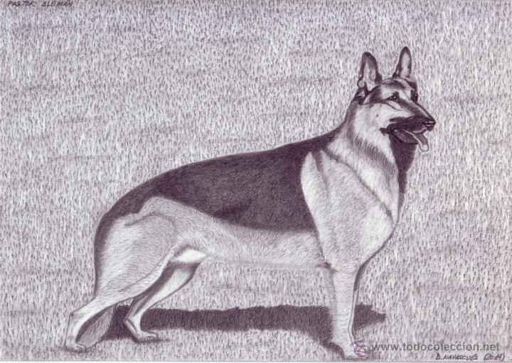 Dibujo Hiperrealista (perro). * Pastor Alemán *