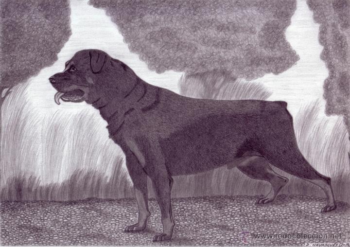Dibujo Hiperrealista Perro Rottweiler L Kaufen