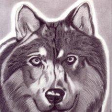 Arte: DIBUJO HIPERREALISTA (ANIMALES VARIOS). * LOBO * (LÁPIZ). DE D. NAVASCUÉS.. Lote 52733392
