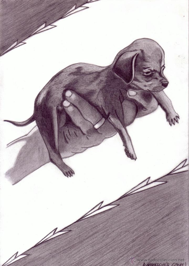 Dibujo Hiperrealista Perro Dachshunnd Enan Kaufen