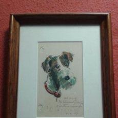 Arte: DIBUJO ANTIGUO DE P.C LAPERA. AÑO 1953. CABEZA DE PERRO. CAP DE GOSS.. Lote 52550883