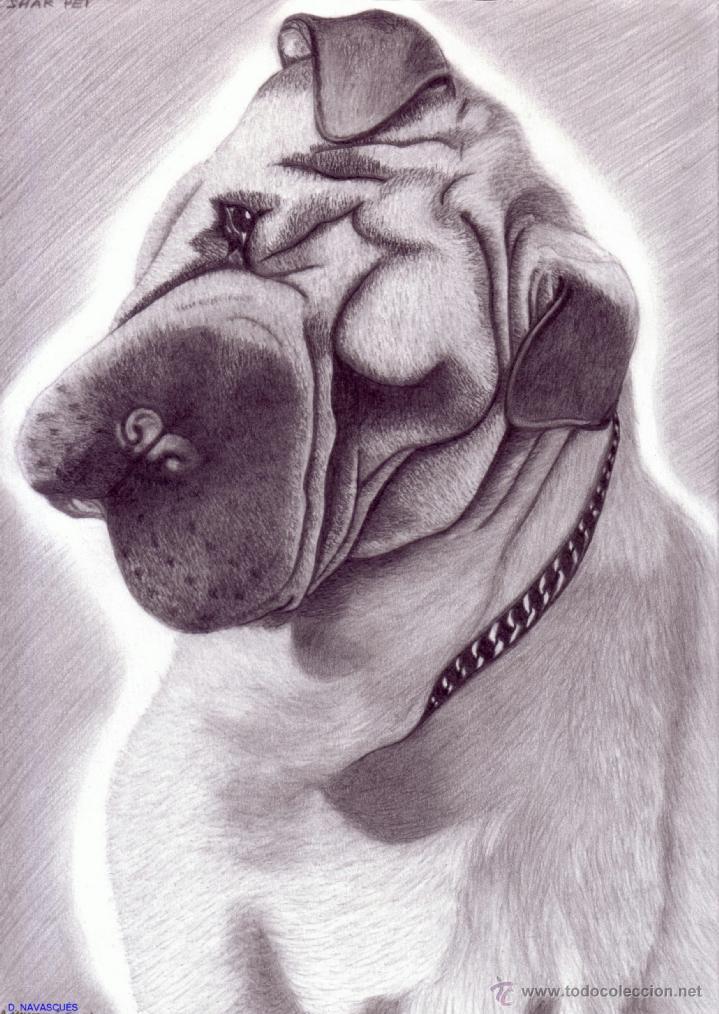 Dibujo Hiperrealista Perro Shar Peiestudi Kaufen