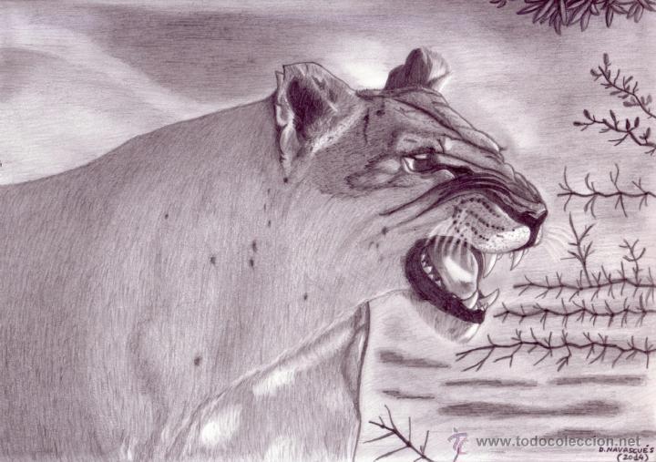 Dibujo Hiperrealista (animales Varios). * Leona
