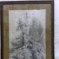 Arte: DIBUJO A LÁPIZ, FIRMADO J. BORBOLLA. SIGLO XIX-XX.- EL VIEJO ÁRBOL CAÍDO.-. Lote 28879075