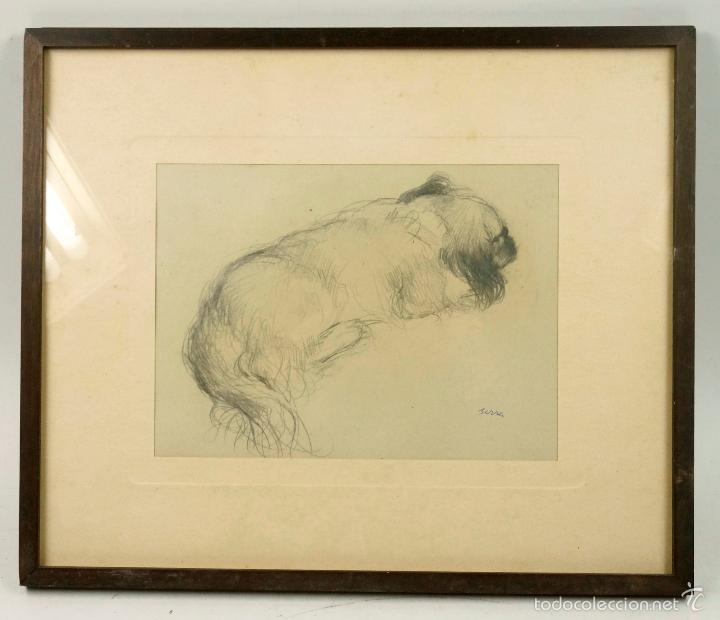 FRANCESC SERRA, DIBUJO DE PERRO, LÁPIZ SOBRE PAPEL 15X21CM. MARCO: 29X34CM. (Arte - Dibujos - Contemporáneos siglo XX)