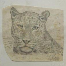 Arte: RETRATO ORIGINAL A LAPIZ DE UN TIGRE, FIRMADO A LAPIZ G.R. 1899. Lote 57271416