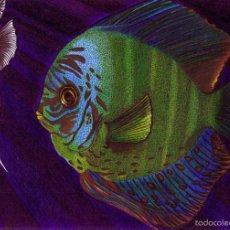 Arte: DIBUJO HIPERREALISTA (ANIMALES VARIOS). * FAUNA MARINA * (TÉCNICA MIXTA). DE D. NAVASCUÉS.. Lote 58160544