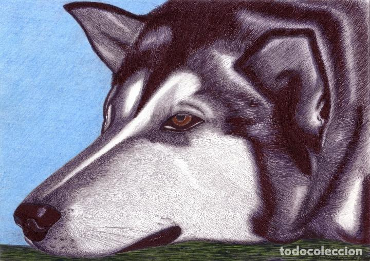 dibujo hiperrealista perro  alaska malamute  Comprar Dibujos