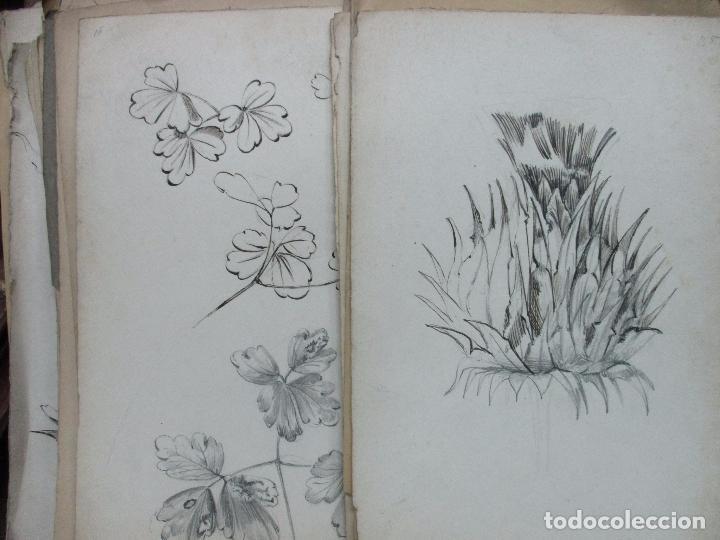 Colección De 74 Dibujos Originales De Flores Y Buy Modern Drawings