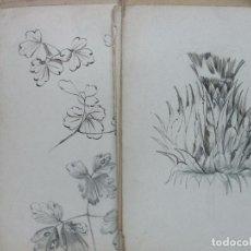 Arte: COLECCIÓN DE 74 DIBUJOS ORIGINALES DE FLORES Y PLANTAS A PLUMA Y LÁPIZ. F. S.XIX. . Lote 73677411