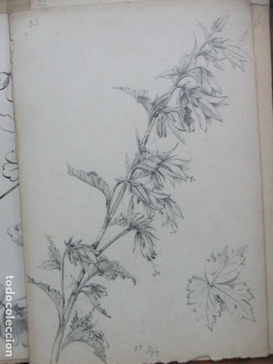 coleccin de 74 dibujos originales de flores y  Comprar Dibujos