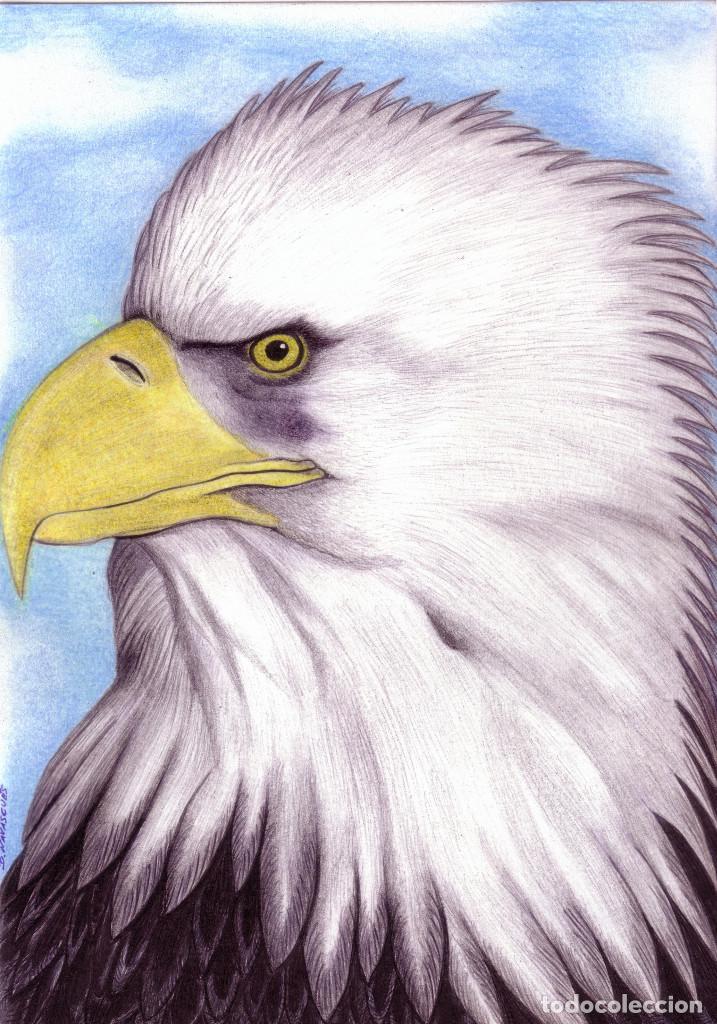 Encantador Página Para Colorear De Cabeza De águila Calva