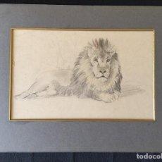 Arte: ESTUDIO DE LEÓN, PLUMILLA, S XIX, . Lote 77216713