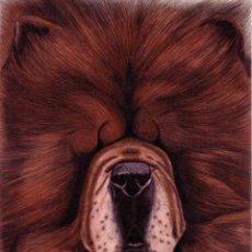 Arte: DIBUJO HIPERREALISTA (PERRO). * CHOW-CHOW/ESTUDIO DE CABEZA * (TÉCNICA MIXTA). DE D. NAVASCUÉS.. Lote 80646174