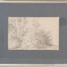 Arte: JOAQUÍM MIR TRINXET (BARCELONA, 1873-1940). ARBRES I MATOLLS. Lote 82269704