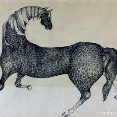 Arte: CABALLO. DIBUJO A PLUMILLA Y TINTA SOBRE PAPEL. ANÓNIMO. ESPAÑA(?). CIRCA 1930. Lote 98200671
