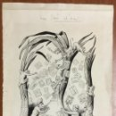 Arte: DIBUJO ORIGINAL SIN FIRMA PUBLICADO EN LA ESQUELLA DE LA TORRATXA 1899 37X26,5 CM CEBA DELS SELLOS. Lote 103706283