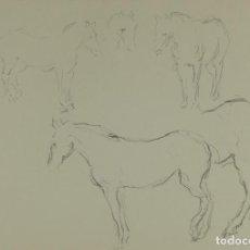 Arte: DIBUJO A LÁPIZ ESTUDIO CABALLOS MEDIADOS SIGLO XX. Lote 103784347