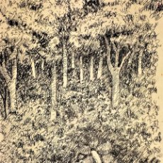 Arte: MANANTIAL EN EL BOSQUE. DIBUJO. TINTA SOBRE PAPEL. ANÓNIMO. ESPAÑA. XIX. Lote 109452171