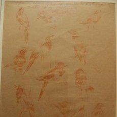 Arte: LÁPIZ DE COLOR SOBRE PAPEL. PÁJAROS. JOSEP COLL I BARDOLET (1912-2007).. Lote 109518383