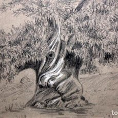 Arte: EDWARD DOUBLEDAY. DIBUJO A LAPIZ TITULADO SWEET CHESNUT SUNDRIDGE. Lote 110636671