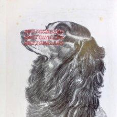 Arte: DIBUJO A LAPIZ/CARBON,CON FIRMA DE AUTOR MARTI/86.MEDIDA:38X27.PINTURA,CUADRO,BELLAS ARTES. Lote 116202795